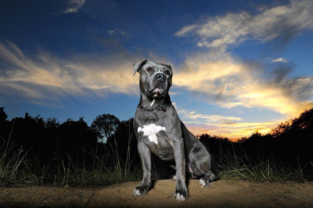 Animal Urgent Care (Escondido, CA) - #0
